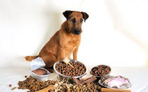 Jaka karma dla psa?